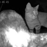 Обзор HIPER IoT Pet Feeder — кормушка для кошек